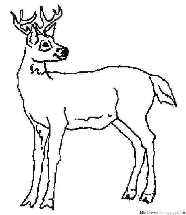 Coloriage animaux page 2 - Coloriage de sanglier ...