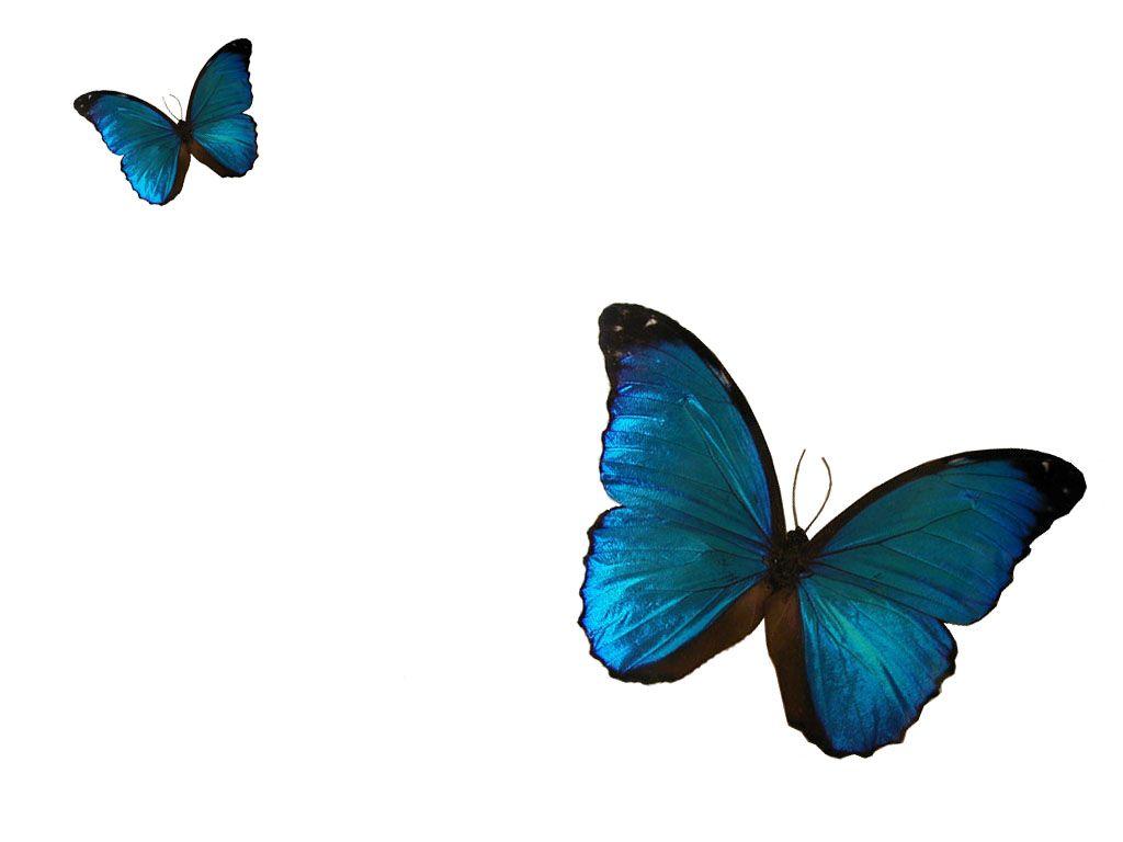 Papillon - Image papillon gratuit ...